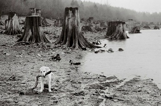 old_dogs_25
