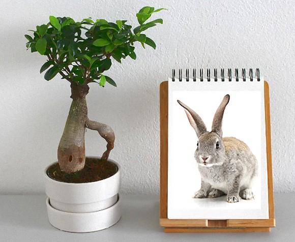 観葉植物にウサギのDNAを混ぜたら、強力な空気清浄機になった