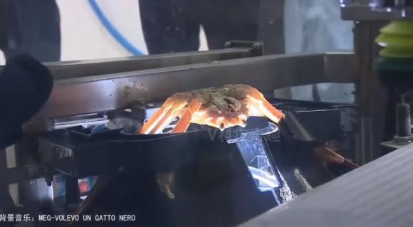 crab10_e