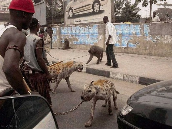 only_in_africa_13