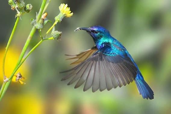 birds_45