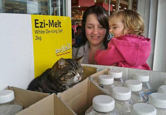 イギリスのスーパーマーケットに勤続4年、猫のマンゴーさんの自由すぎる仕事っぷりが人気を集める。