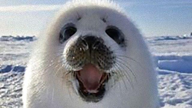 動物だって、幸せなら笑顔になっちゃうんだよ!笑顔がヤバイ写真の数々をまとめてどうぞ