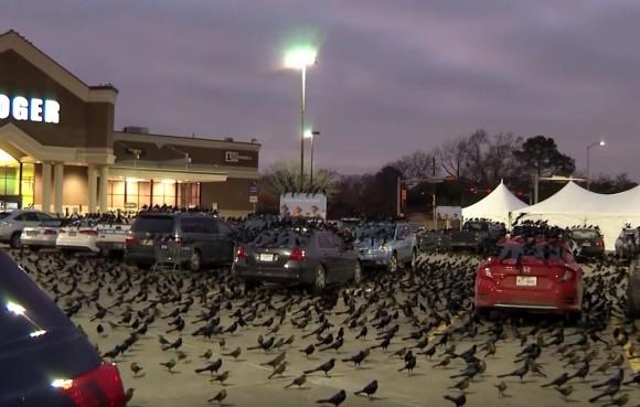 ヒッチコックの世界が現実に!?数千もの真っ黒な鳥が駐車場を覆い尽くす終末的光景(アメリカ)