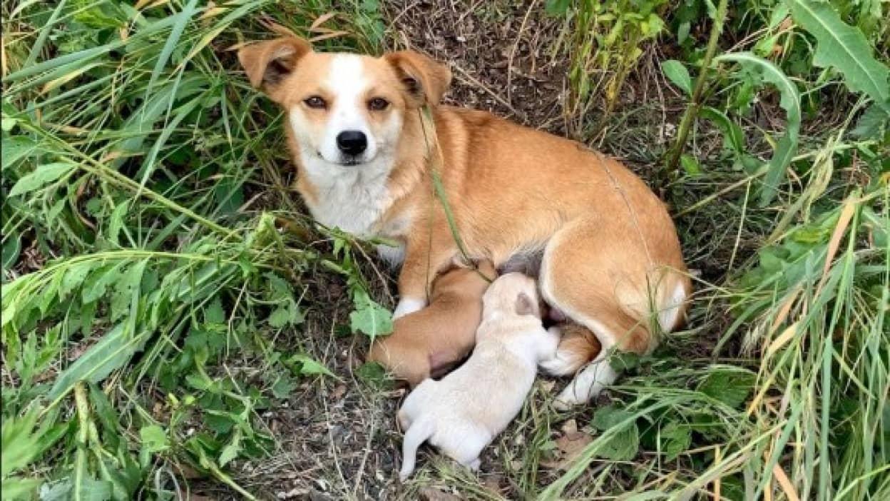 捨てられた後も他の人を寄せ付けず元の飼い主を待ち続けていた母犬