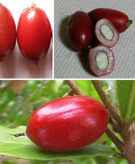 amazing_fruits_11