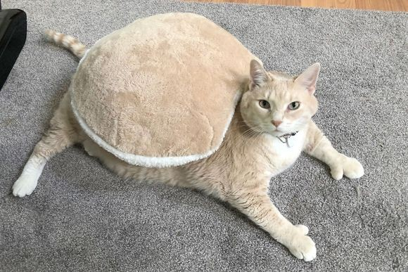 太っちょ猫のダイエット計画。インスタグラムでその過程を公開中