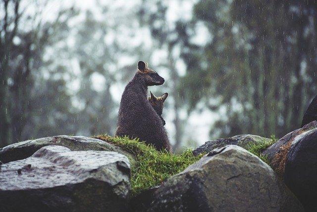 野生生物が50年で3分の2以下に減少