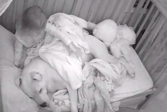 地震!その直後、大きな愛犬を自分のベッドに運び込み一緒に恐怖を乗り越えようとした小さな少女(アメリカ)