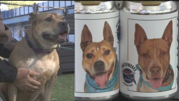 ビール缶に印刷された保護犬の写真を見て、愛犬と再会を果たした女性(アメリカ)