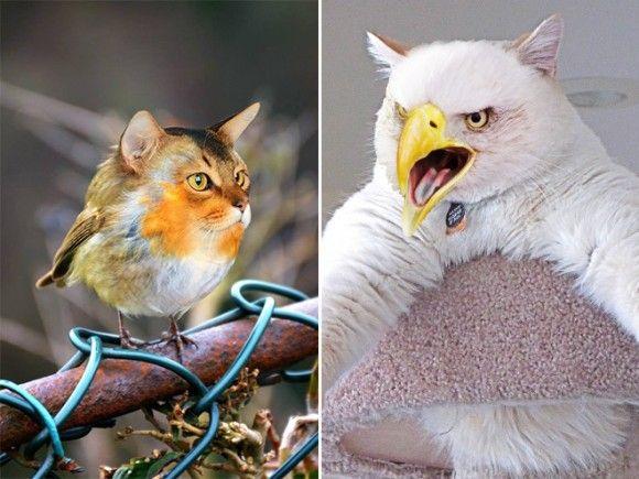 猫はかわいい。鳥もかわいい。合体させたら無双じゃね?コラ職人が試してみた。