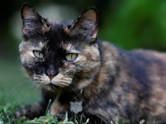 3 cat_e