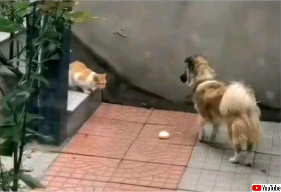 お腹を空かせた野良猫に自分の餌を分け与える犬