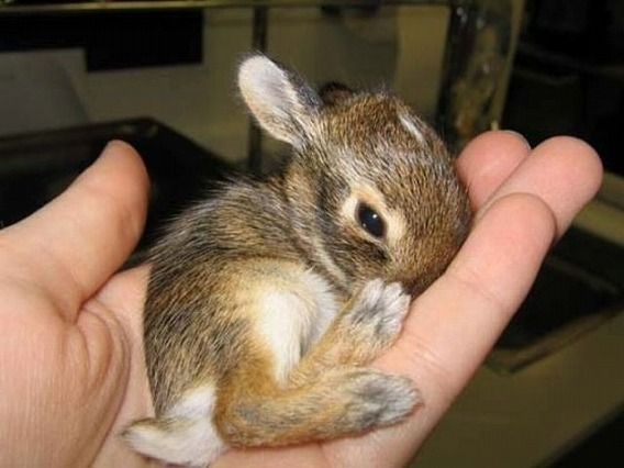 the_smallest_pets_640_01