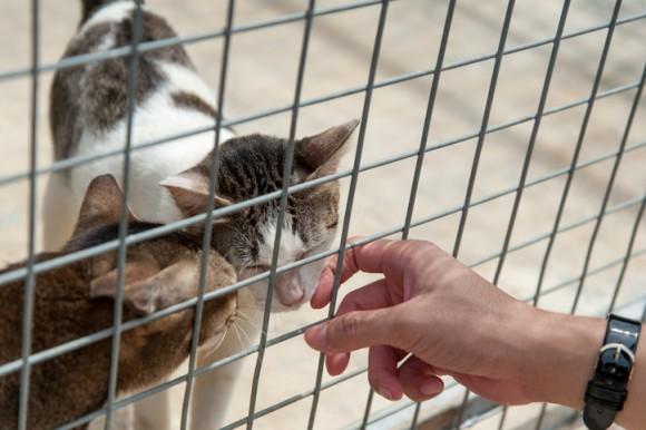 2日間で施設にいる猫全て、67匹の飼い主が決まる!収容キャパを超えた保護施設のアイデア・キャンペーンが大成功(カナダ)