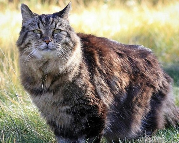 114歳のインコ、507歳のはまぐり、ネット上で話題となった10の長生き動物
