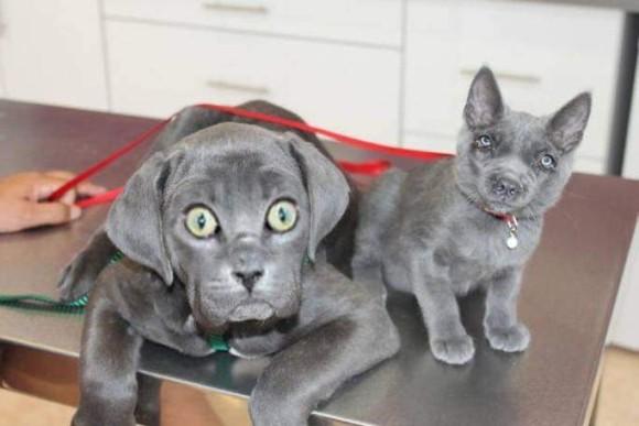 違和感あったりなかったり。犬と猫の顔だけを入れ替えてみた7枚のコラ画像