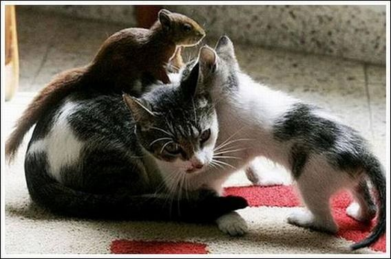 cats_and_squirell_01