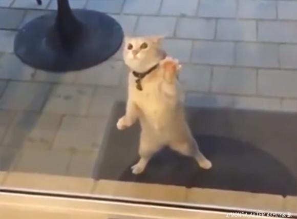 見えない敵と戦う猫の超高速シャカシャカ