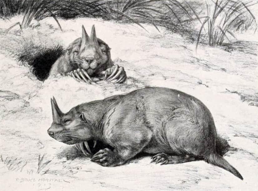 ケラトガウルス
