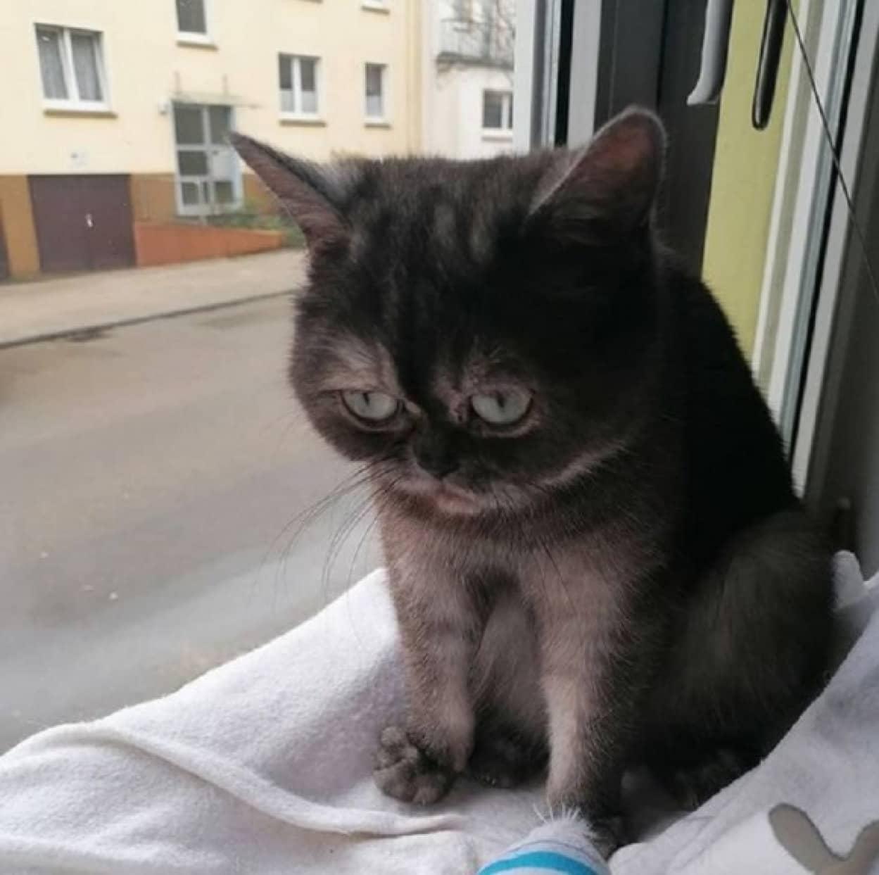 気難しい表情をした猫、1年後の保護施設暮らしの後やっと永遠の家に