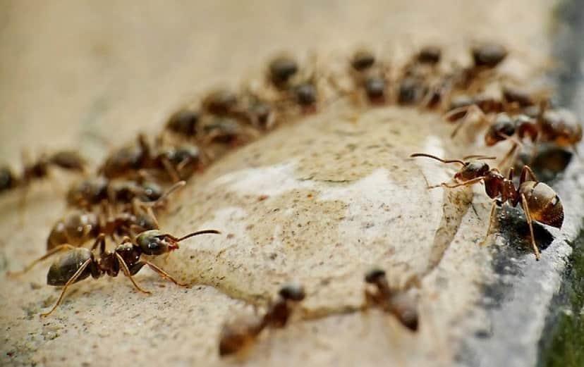 ants-4637999_640
