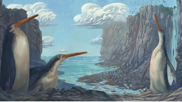 約3,000万年前を生きた脚の長い新種の巨大ペンギンの化石が発見される