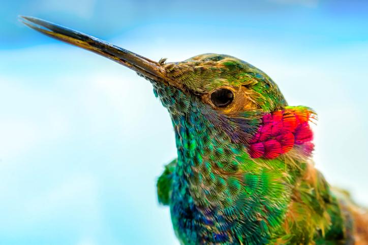 ハチドリのビジョンは想像以上!人間には見えない多彩な色が見えている