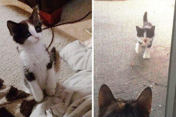 NNNのお導き?愛猫が寿命を迎えこの世を去る1か月前に子猫が自宅に派遣されてきた。寂しさをまぎらわせてくれた。