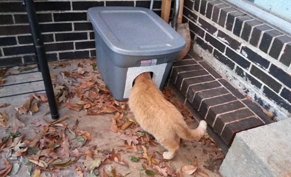 寒くなってきたので、野良猫たちが暖をとれる猫ホイホイを作ってみた。まんまとかかったようだ。