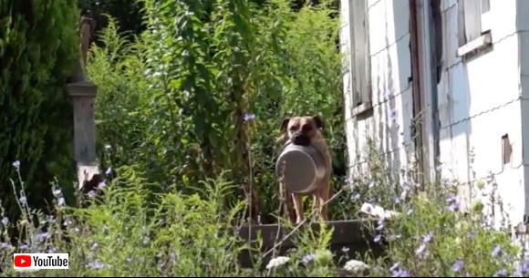 からっぽの皿を口にくわえながら餌をくれる人を探し求めて・・・人間に捨てられ家をなくした野良犬の物語(アメリカ)