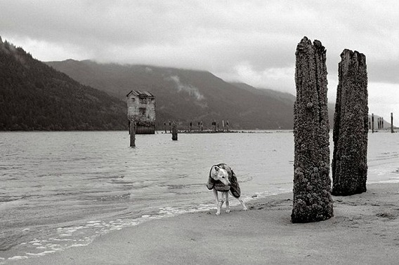 old_dogs_28