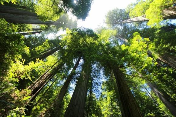 sequoia-274158_640_e