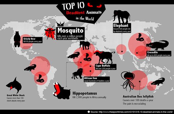 top-10-deadliest-animals-in-the-world_52ba865607db3
