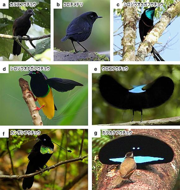 あの超黒素材ベンタブラックに匹敵するほど真っ黒な鳥「超黒鳥