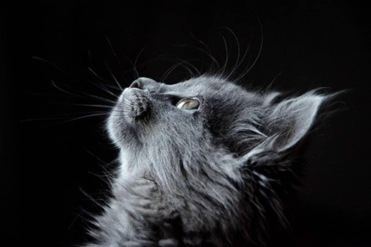 歴史的偉業を成し遂げた8匹の猫