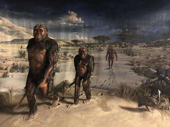 数百万年前の超新星が人類を二足歩行に導いたとする説が発表される(米研究)