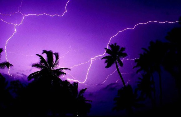 ヤシの木と雷