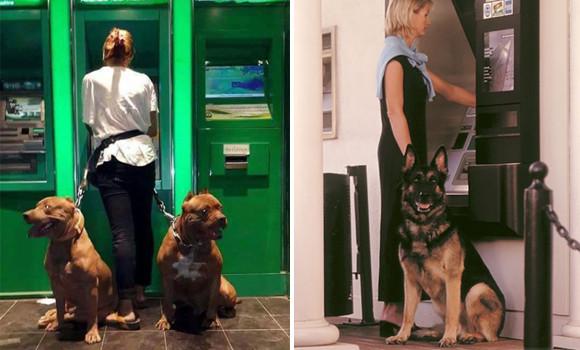 ガチでガードします!飼い主を現金強奪犯から守るATM護衛犬のいる風景