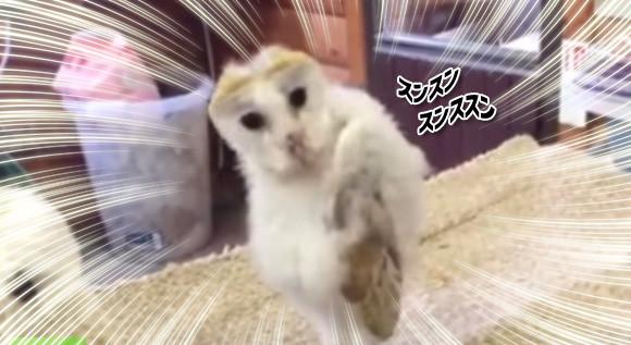 素人じゃないな?フクロウのユラユラダンスがファンキーの画像