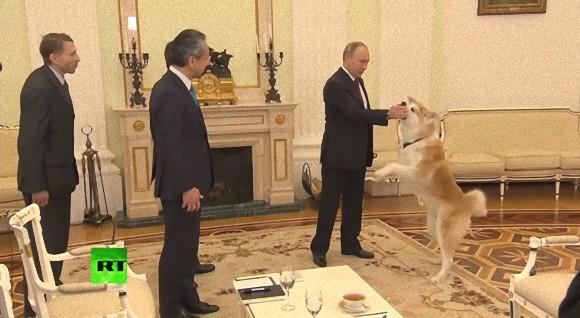 ロシアの犬となった秋田県ゆめ。グレムリンでプーチンを護衛、日本人取材陣を前に大きく吠える