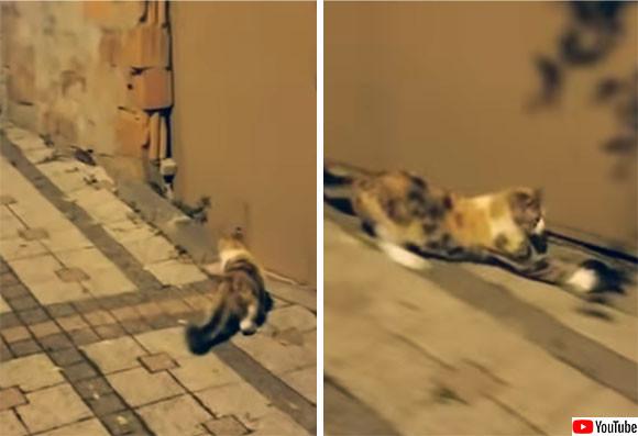 「窮鼠猫を噛む」とはまさにこのこと!猫に追い詰められたネズミ、反撃ののろしを上げた(トルコ)