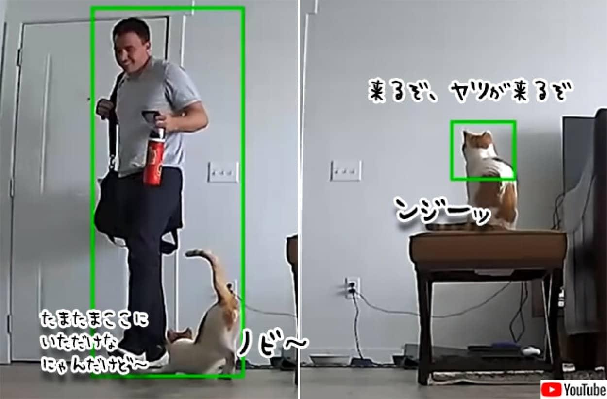飼い主が帰宅時の猫の行動を動体検知モニターで観察。ツンデレのデレが炸裂