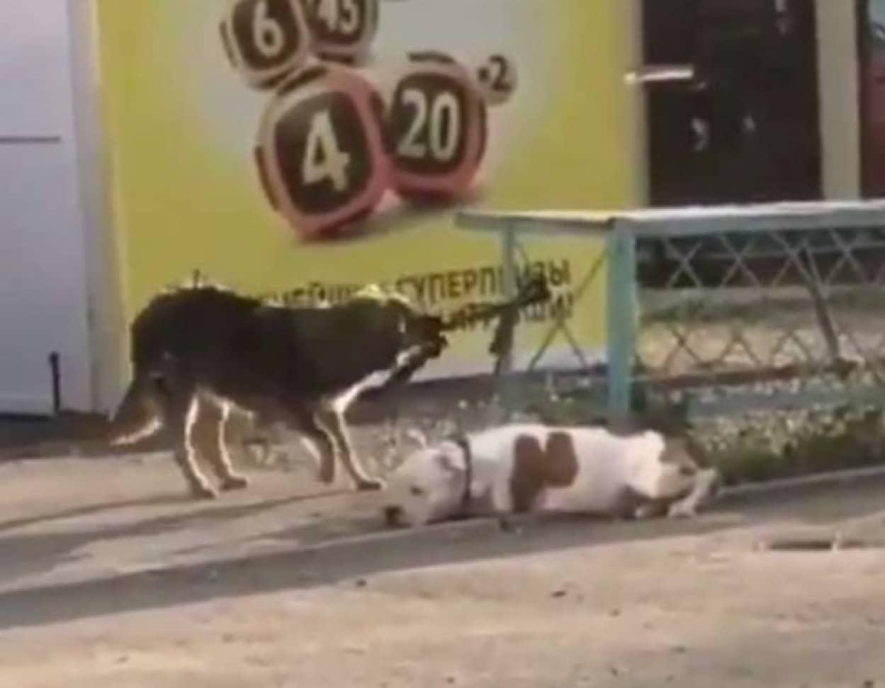 dog1_e