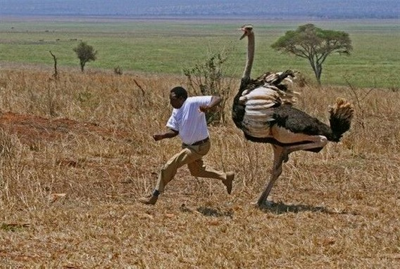 only_in_africa_16