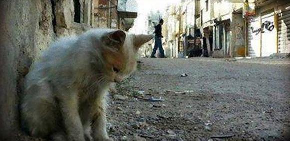 激戦の続くシリアで放置された猫を救う反政府軍の「猫大佐」(追記:画像追加)