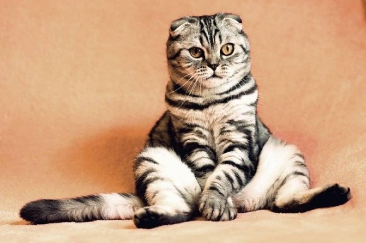 個性豊かな猫の名づけ