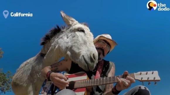 やさしい世界がここに。男性がギターを弾く時はいつも、そばに寄り添いうっとりするロバ