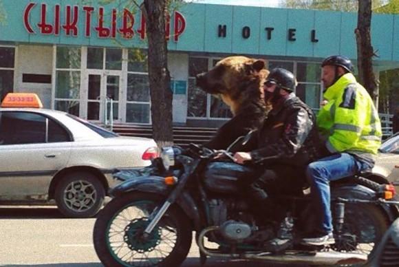 道路を車で走っていたらクマとすれ違うロシアでみかけた光景