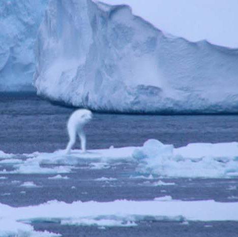 antarctic_humanoid_3
